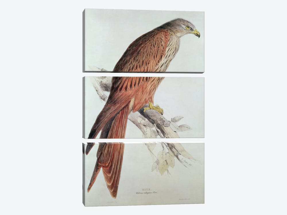 Kite by Edward Lear 3-piece Canvas Wall Art
