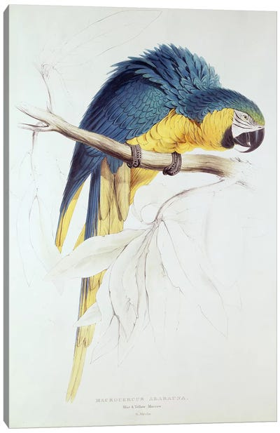 Blue and yellow Macaw  Canvas Art Print