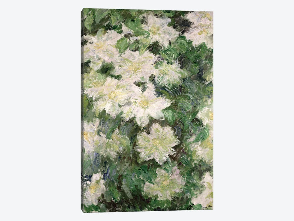 White Clematis, 1887  by Claude Monet 1-piece Canvas Print