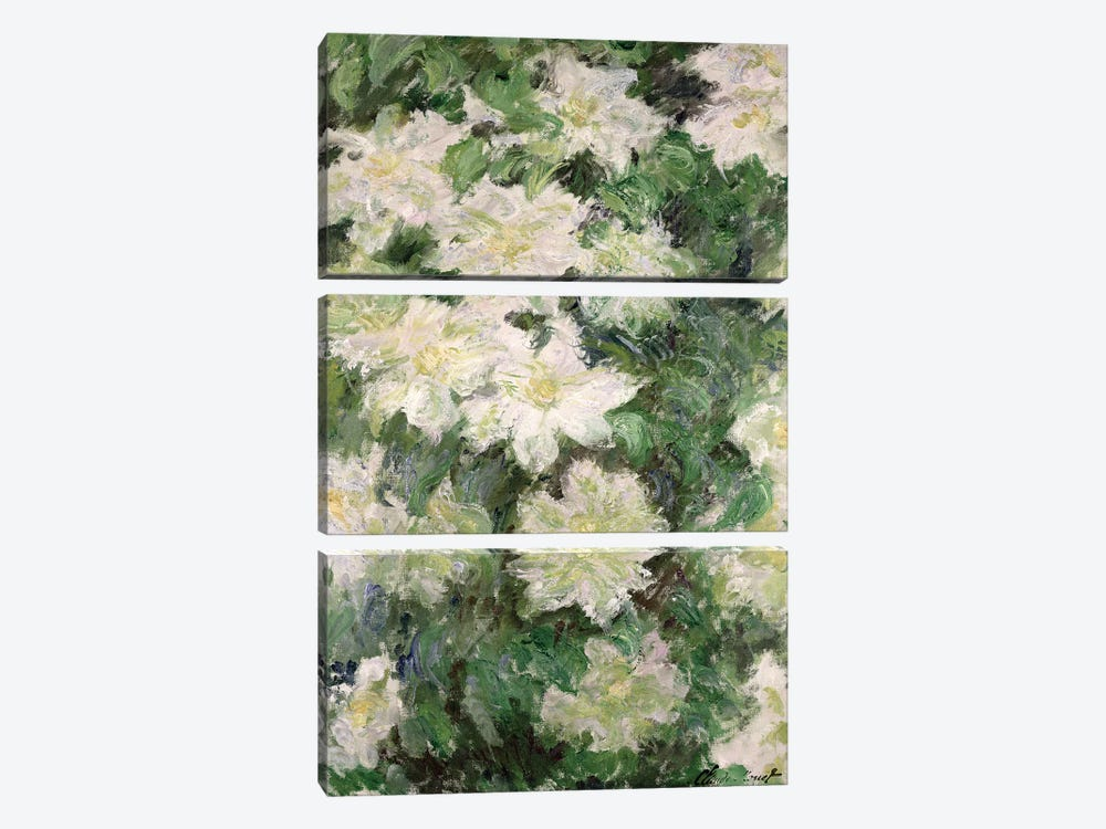 White Clematis, 1887  by Claude Monet 3-piece Art Print