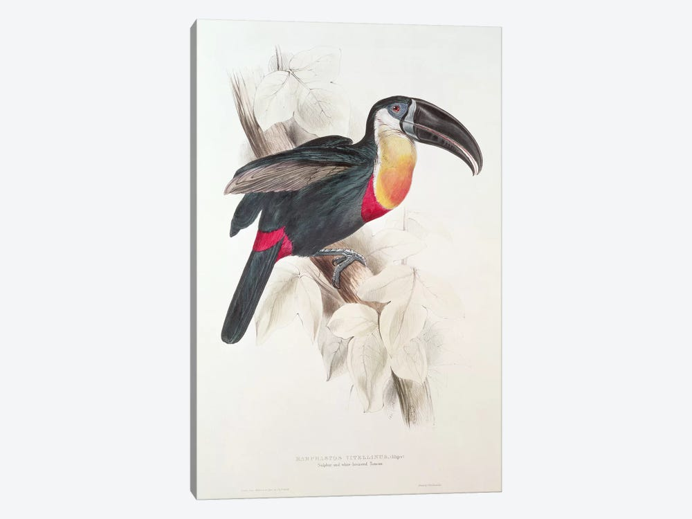 Sulphur and white breasted Toucan, 19th century  by Edward Lear 1-piece Canvas Artwork