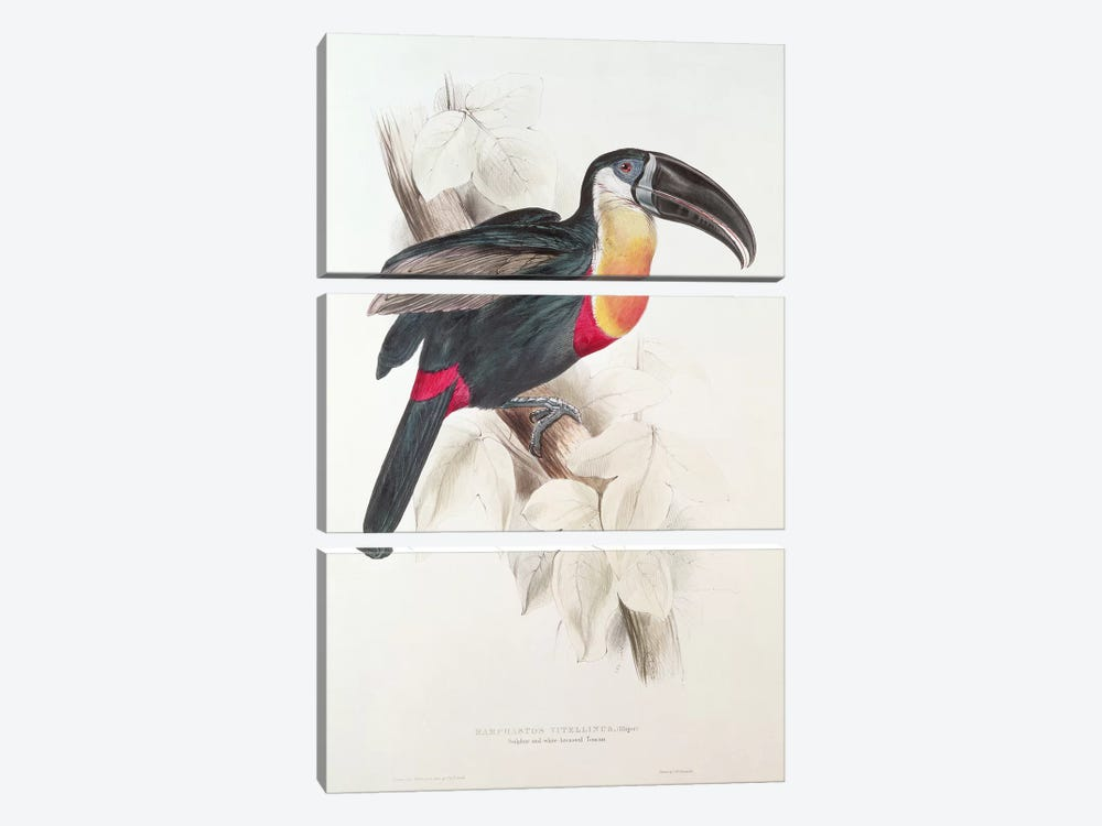 Sulphur and white breasted Toucan, 19th century  by Edward Lear 3-piece Canvas Wall Art