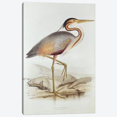Purple Heron  Canvas Print #BMN254} by Edward Lear Canvas Wall Art