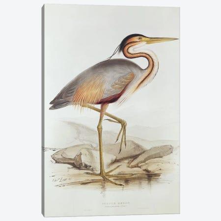 Purple Heron  Canvas Print #BMN254} by Edward Lear Canvas Wall Art