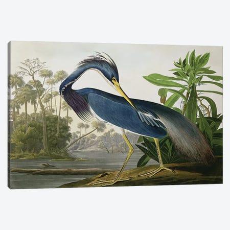 Louisiana Heron Canvas Print #BMN2559} by John James Audubon Canvas Art
