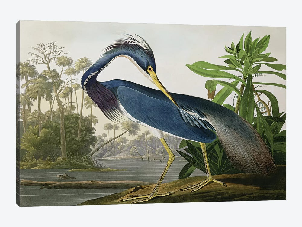 Louisiana Heron by John James Audubon 1-piece Art Print