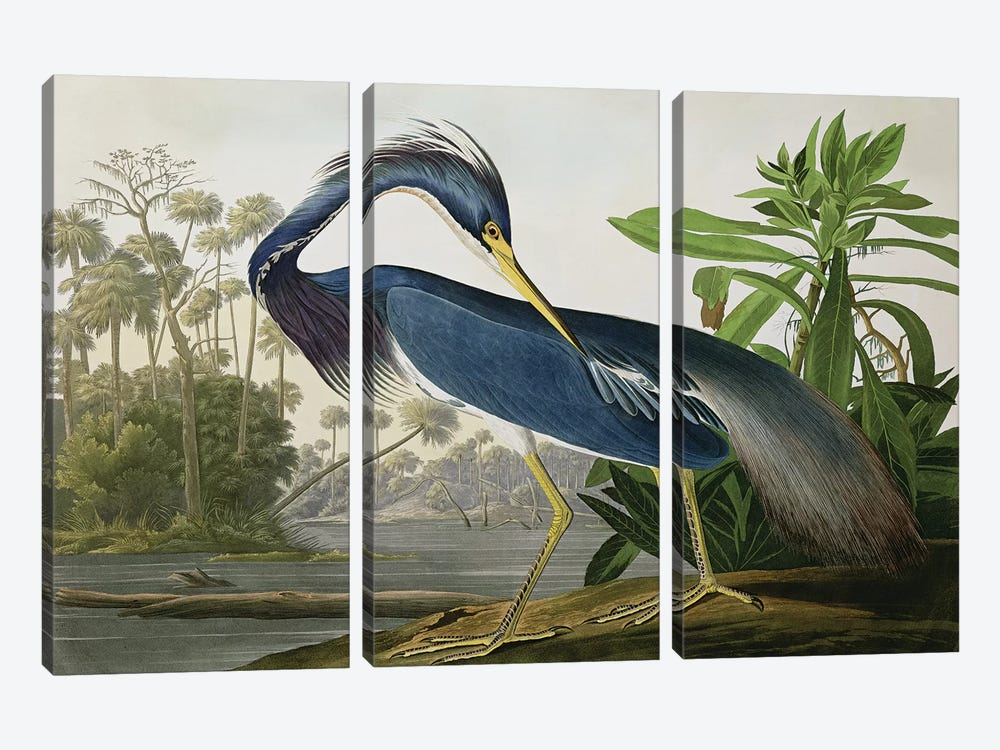Louisiana Heron by John James Audubon 3-piece Canvas Print