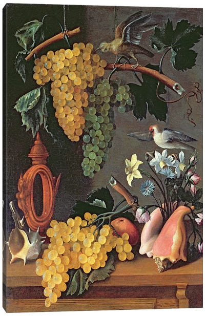 Still Life with Grapes, Birds, Flowers and Shells  Canvas Art Print