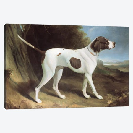 Portrait of a liver and white pointer  Canvas Print #BMN258} by George Garrard Canvas Art Print