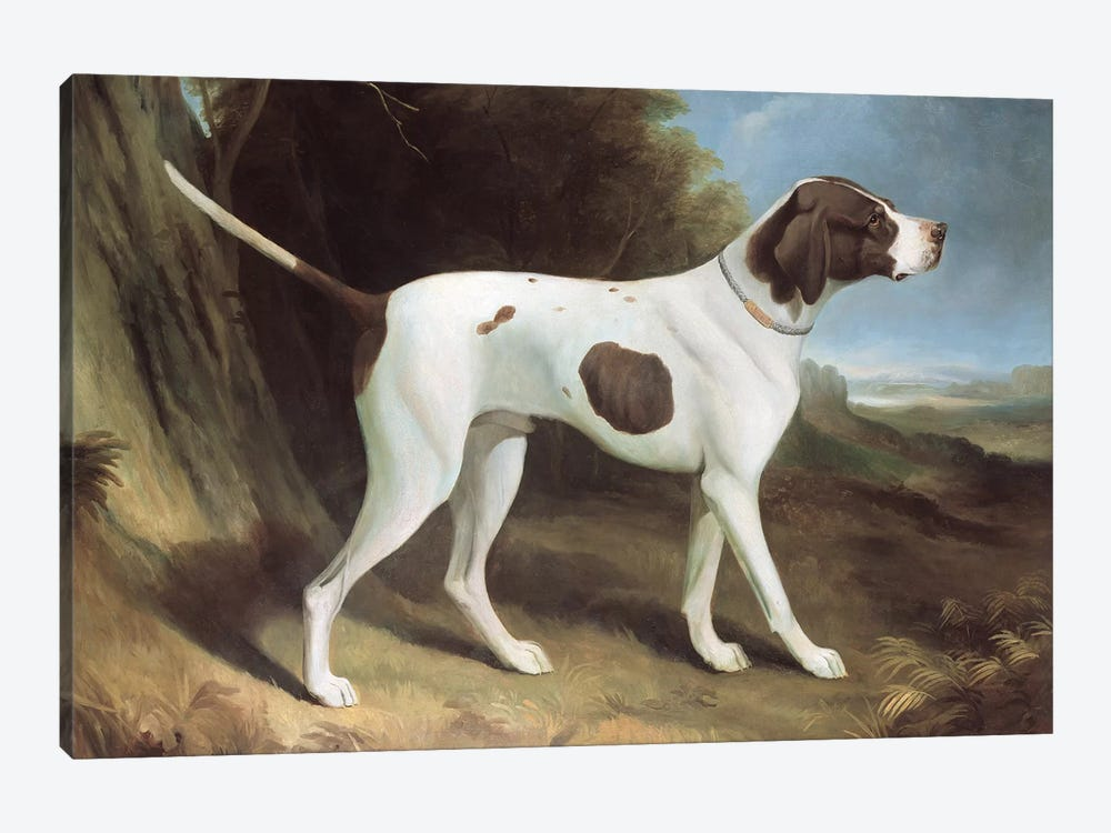 Portrait of a liver and white pointer  by George Garrard 1-piece Art Print