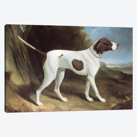 Portrait of a liver and white pointer  Canvas Print #BMN258} by George Garrard Canvas Art Print