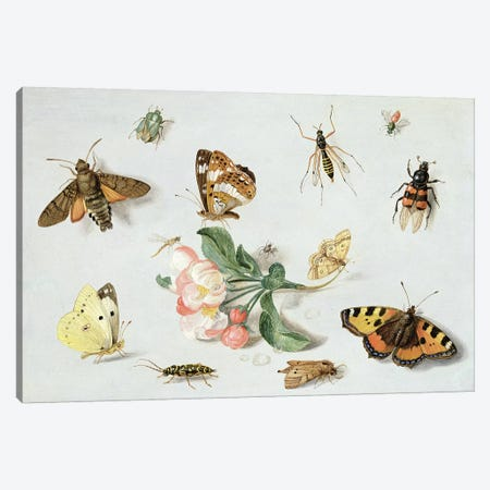 Butterflies, moths and other insects with a sprig of apple blossom  Canvas Print #BMN2598} by Jan van Kessel Canvas Wall Art