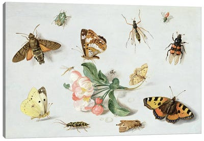 Butterflies, moths and other insects with a sprig of apple blossom  Canvas Art Print