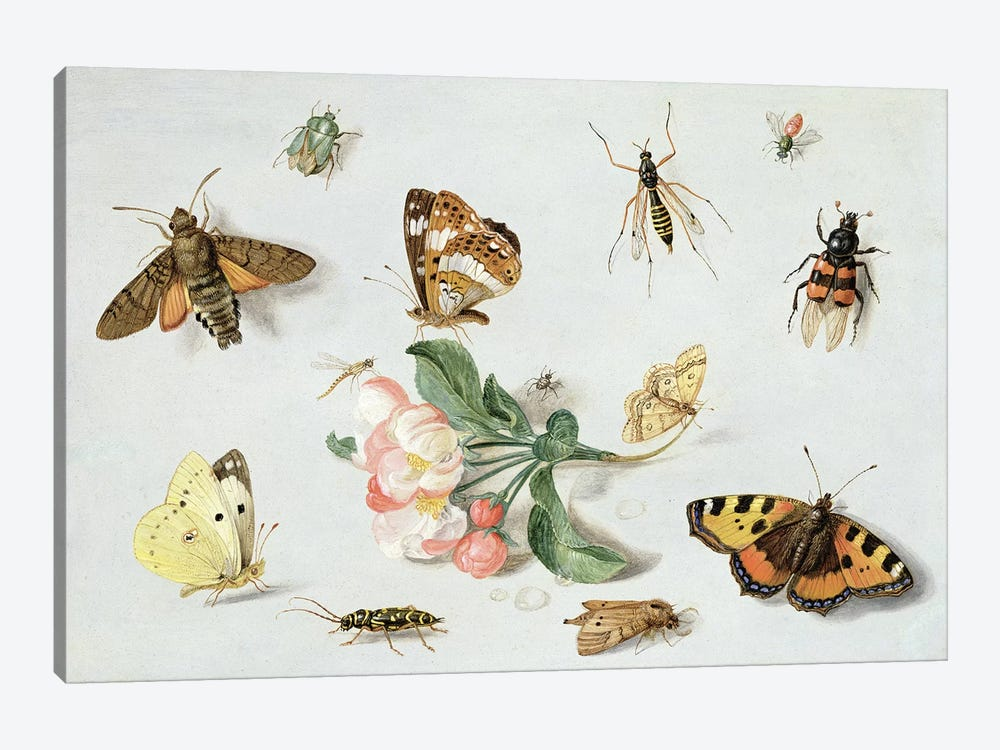Butterflies, moths and other insects with a sprig of apple blossom  by Jan van Kessel 1-piece Canvas Wall Art