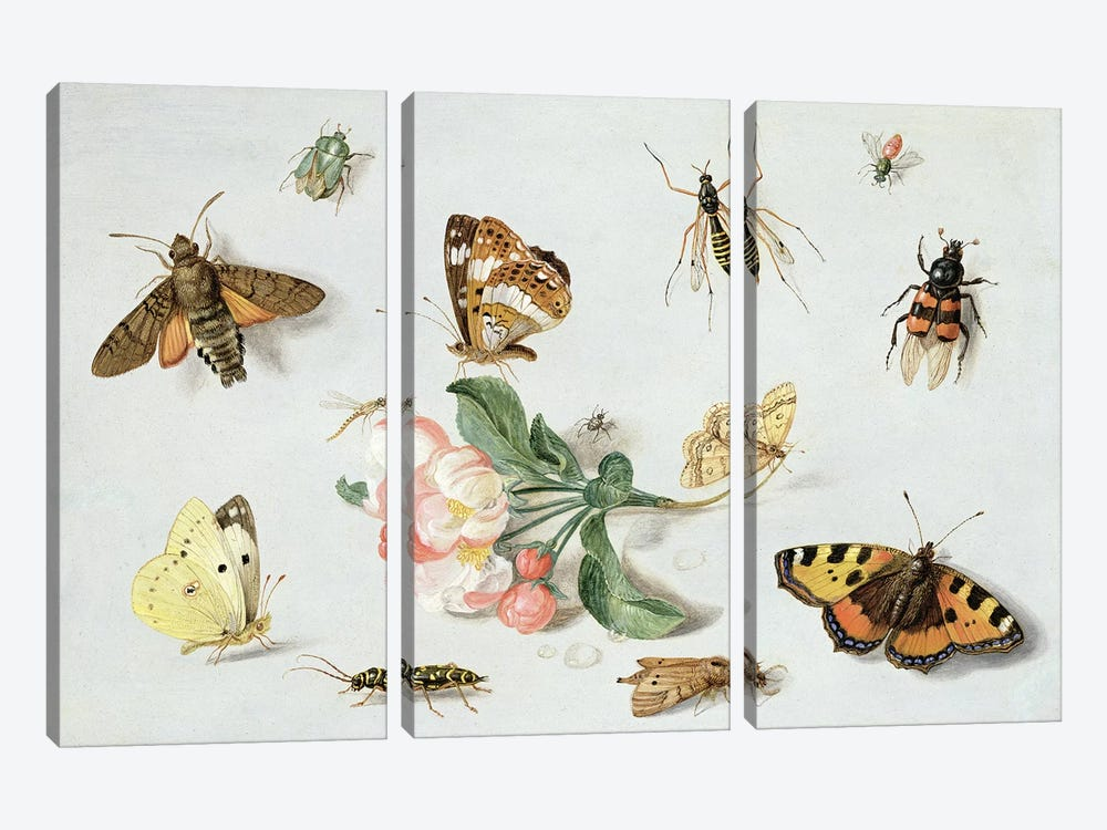 Butterflies, moths and other insects with a sprig of apple blossom  by Jan van Kessel 3-piece Canvas Wall Art