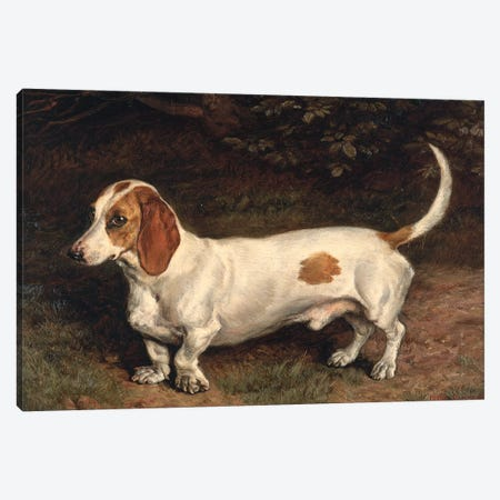 A Favourite Dachshund  Canvas Print #BMN2623} by Frank Paton Canvas Art