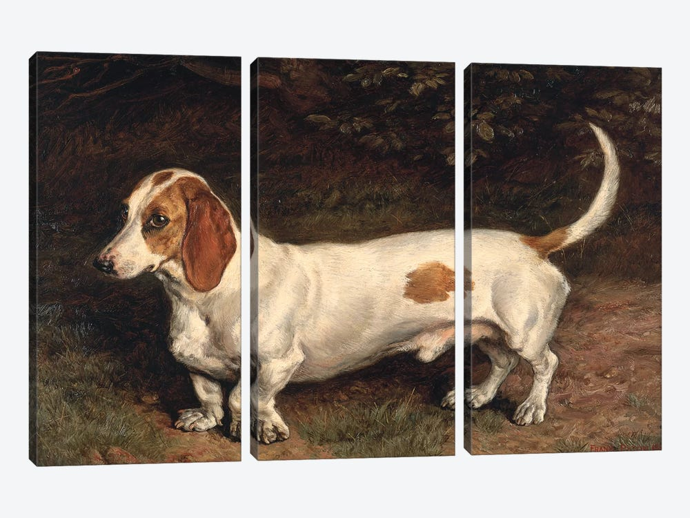 A Favourite Dachshund  3-piece Canvas Wall Art