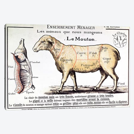 Mutton: diagram depicting the different cuts of meat  Canvas Print #BMN2717} by French School Canvas Art Print