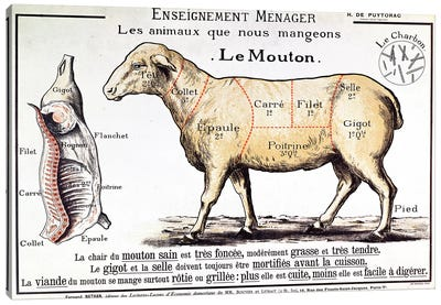 Mutton: diagram depicting the different cuts of meat  Canvas Art Print