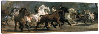Study For The Horsemarket, 1852-54 Canvas Art Print