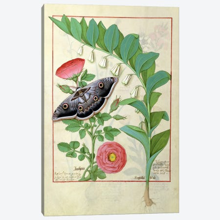 Ms Fr. Fv VI #1 fol.118v Rose and Polygonatum  Canvas Print #BMN2733} by Robinet Testard Canvas Art