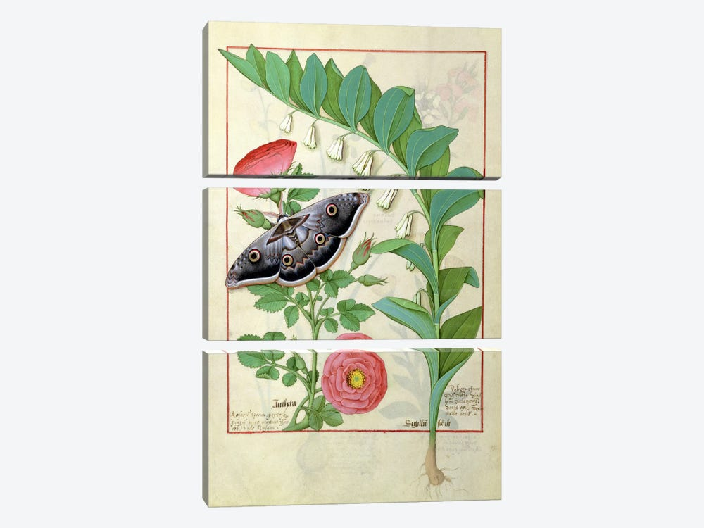 Rose And Polygonatum (Illustration From The Book of Simple Medicines) by Robinet Testard 3-piece Canvas Wall Art