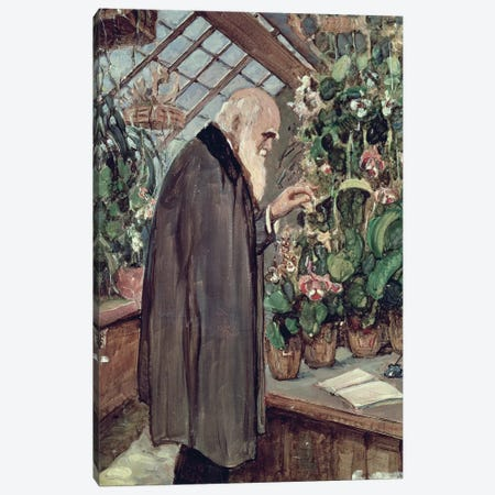 Charles Robert Darwin  Canvas Print #BMN274} by John Collier Canvas Art