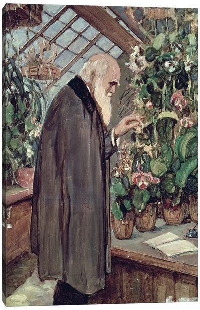 Charles Robert Darwin  Canvas Art Print