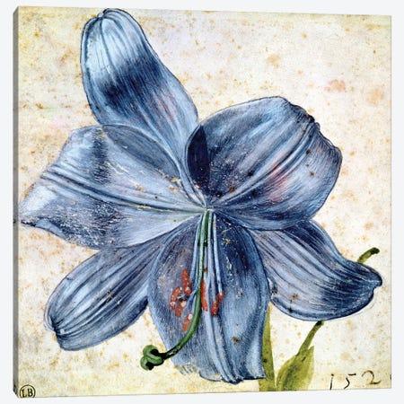 Study of a lily, 1526  Canvas Print #BMN2753} by Albrecht Dürer Canvas Artwork