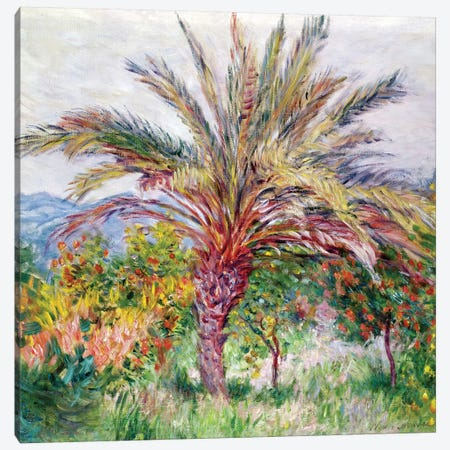Palm Tree at Bordighera, c.1884  Canvas Print #BMN2804} by Claude Monet Art Print