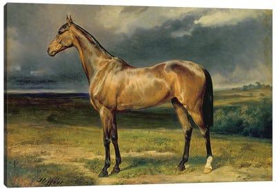 Abdul Medschid' the chestnut arab horse, 1855  Canvas Art Print