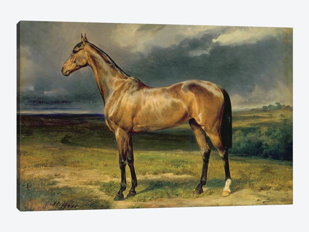 Abdul Medschid' the chestnut arab horse, 1855  by Carl Constantin Steffeck 1-piece Canvas Art