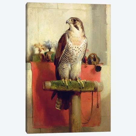 Falcon, 1837  Canvas Print #BMN2858} by Sir Edwin Landseer Canvas Art Print