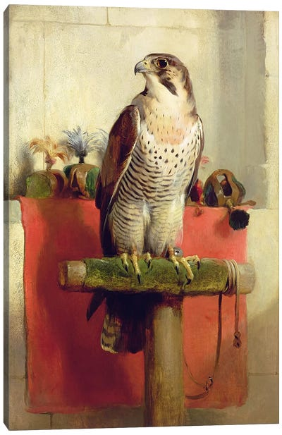 Falcon, 1837 Canvas Art Print