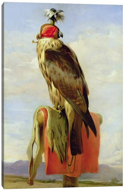 Hooded Falcon  Canvas Art Print