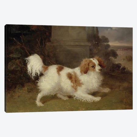 A Blenheim Spaniel, c.1820-30  Canvas Print #BMN2866} by William Webb Art Print