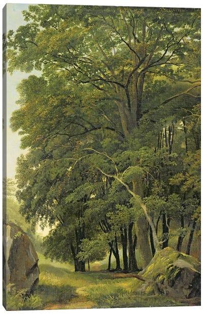 A Wooded Landscape  Canvas Art Print