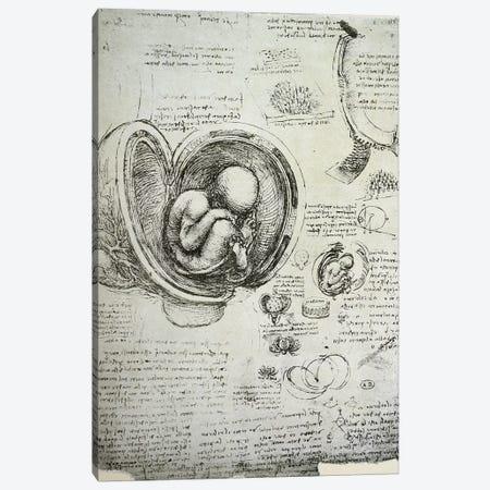 The Human Foetus in the Womb, facsimile copy  Canvas Print #BMN2914} by Leonardo da Vinci Canvas Art Print