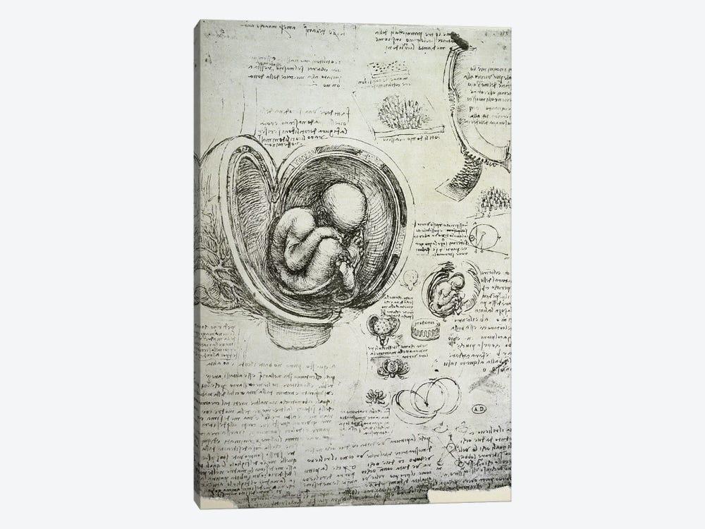 The Human Foetus in the Womb, facsimile copy  by Leonardo da Vinci 1-piece Canvas Wall Art