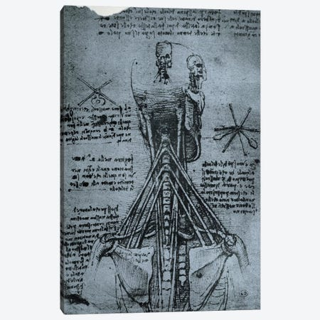 Bone Structure of the Human Neck and Shoulder, facsimile copy  Canvas Print #BMN2915} by Leonardo da Vinci Art Print