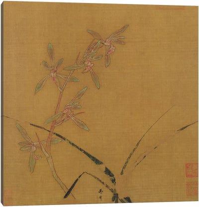 Orchids  Canvas Art Print
