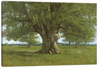 The Oak of Flagey, called Vercingetorix Canvas Art Print