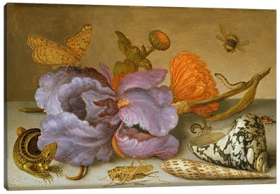 Still life depicting flowers, shells and insects  Canvas Art Print