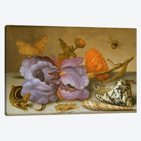 Still life depicting flowers, shells and insects  Canvas Print #BMN2996} by Balthasar van der Ast Art Print