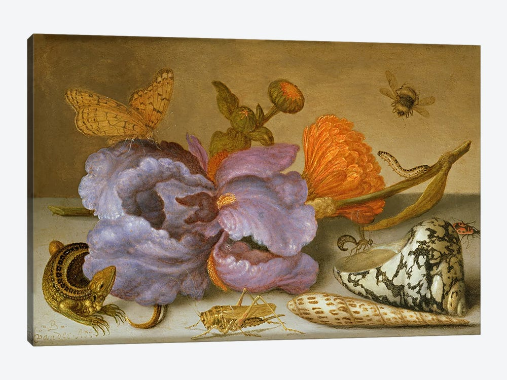 Still life depicting flowers, shells and insects  by Balthasar van der Ast 1-piece Canvas Wall Art