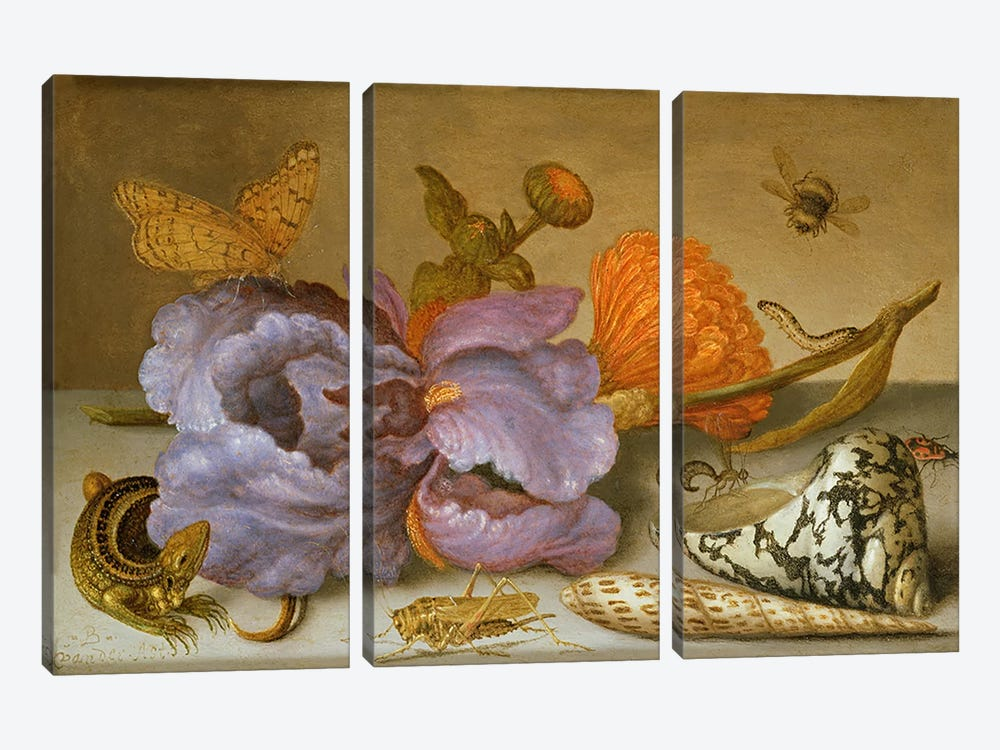 Still life depicting flowers, shells and insects  by Balthasar van der Ast 3-piece Canvas Artwork