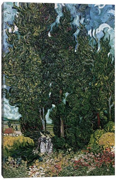 The cypresses, c.1889-90  Canvas Art Print