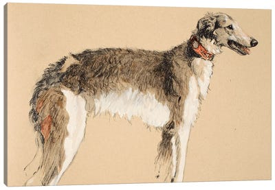 Borzoi, 1930, Illustrations from his Sketch Book used for 'Just Among Friends', Aldin, Cecil Charles Windsor  Canvas Art Print