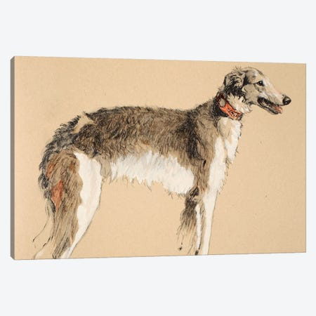 Borzoi, 1930, Illustrations from his Sketch Book used for 'Just Among Friends', Aldin, Cecil Charles Windsor  Canvas Print #BMN3054} by Cecil Charles Windsor Aldin Art Print