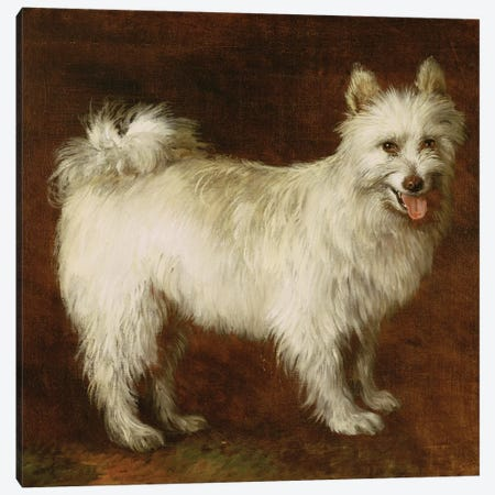 Spitz Dog, c.1760-70  Canvas Print #BMN3076} by Thomas Gainsborough Canvas Print
